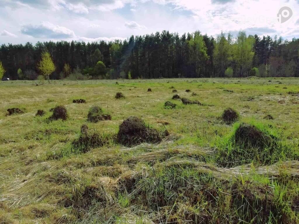 муравьиное царство сергиев посад