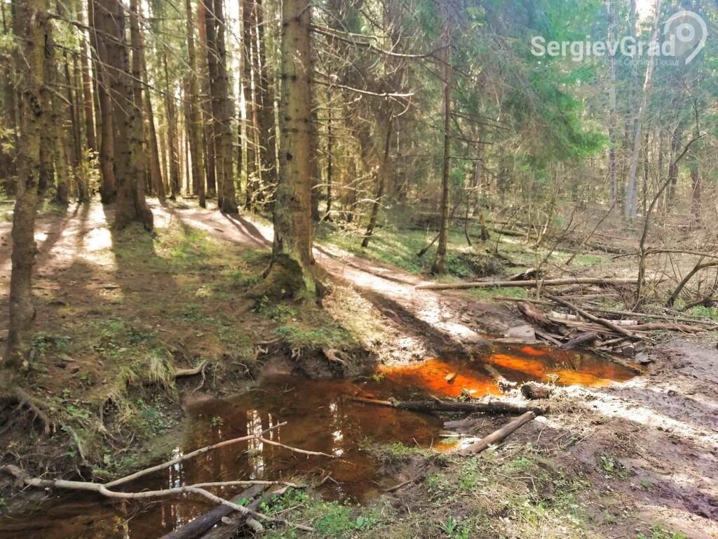 реликтовый лес сергиев посад