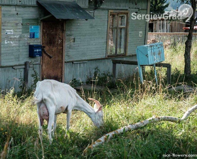 почта россии 1.jpg