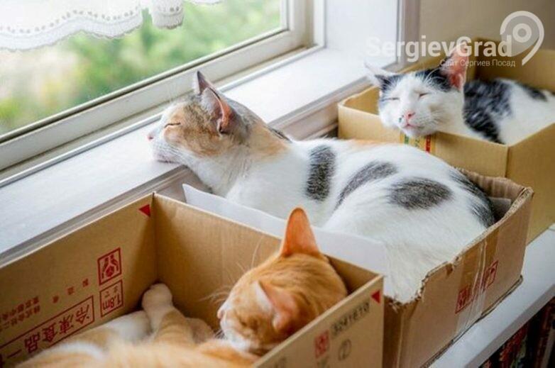 Коты в коробках 1.jpg