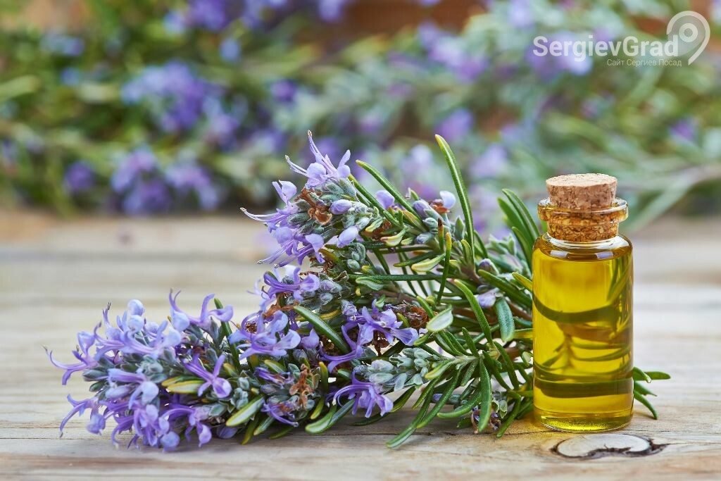 Эфирное масло розмарина улучшает память