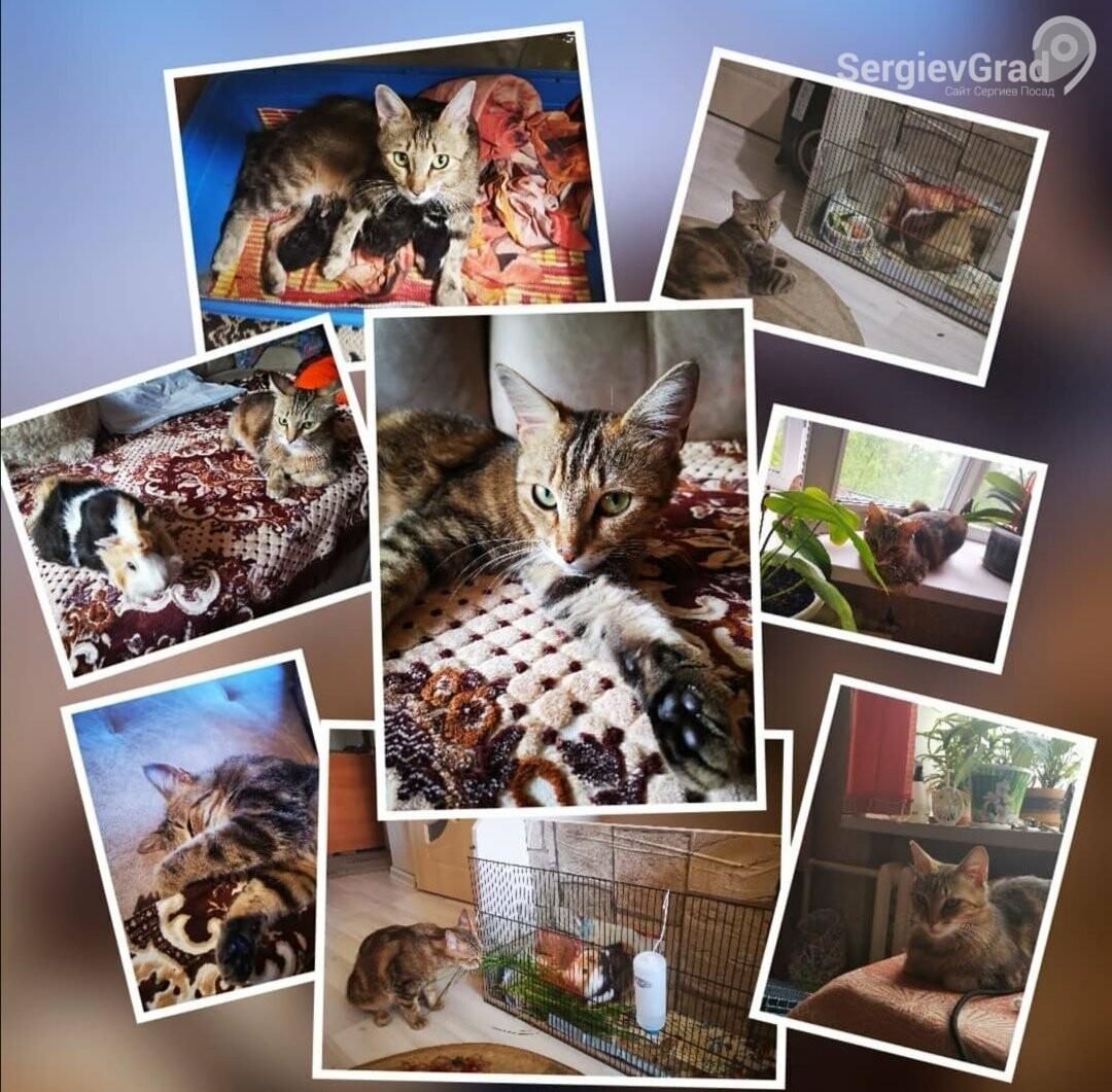Участница конкурса «Домашние и смешные»: кошка Мэрси, фото-1