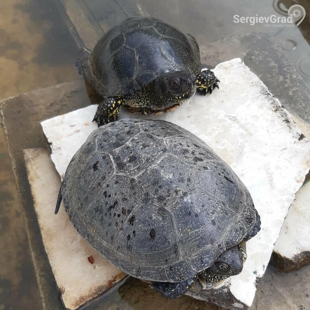 Участники конкурса «Домашние и смешные»: черепахи Миша и Тортила, фото-3