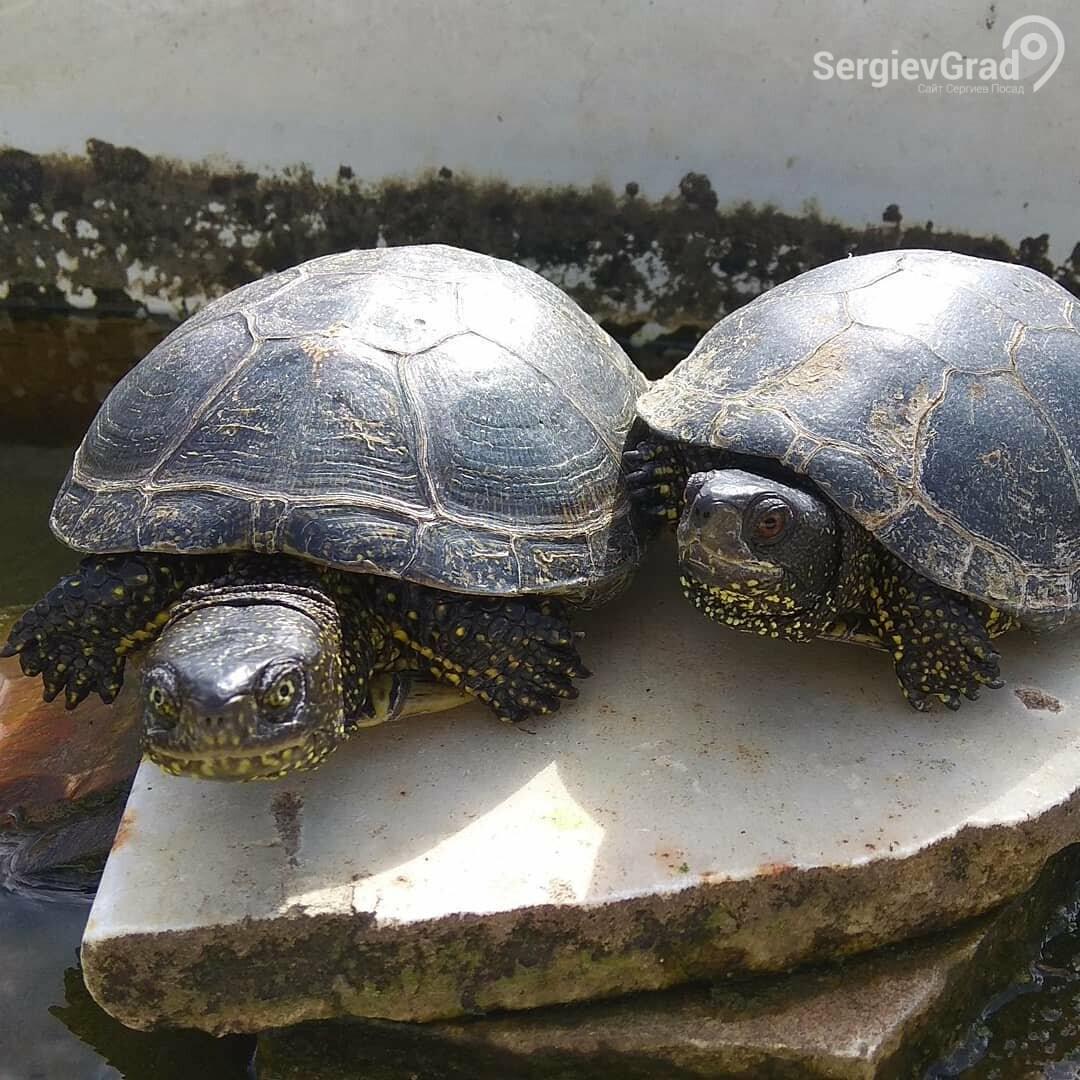 Участники конкурса «Домашние и смешные»: черепахи Миша и Тортила, фото-1