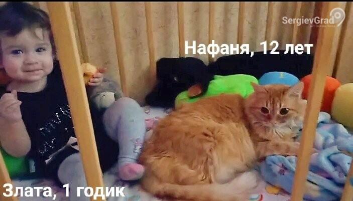 Участник конкурса «Верный друг» кот-нянька Нафаня