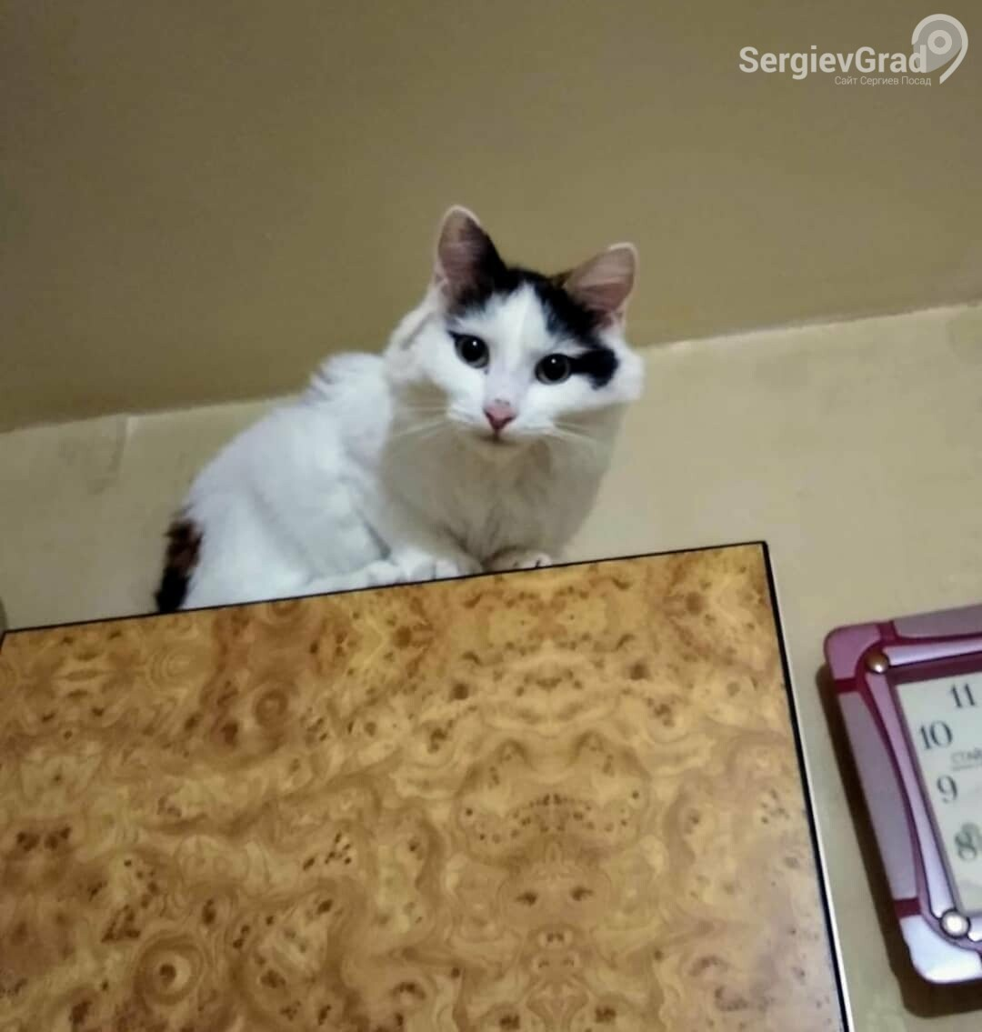 Участница конкурса «Верный друг» кошка Мася