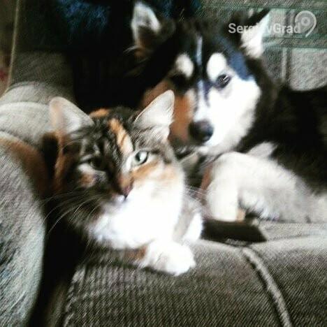 Участники конкурса «Верный друг», кошка Мася и собачка Айка
