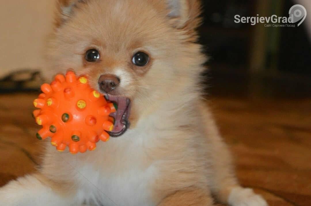 Участница конкурса «Верный друг» собачка Эля