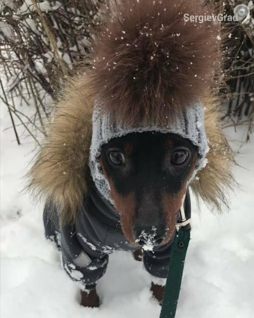 Участник конкурса «Верный друг» собачка Тимоша