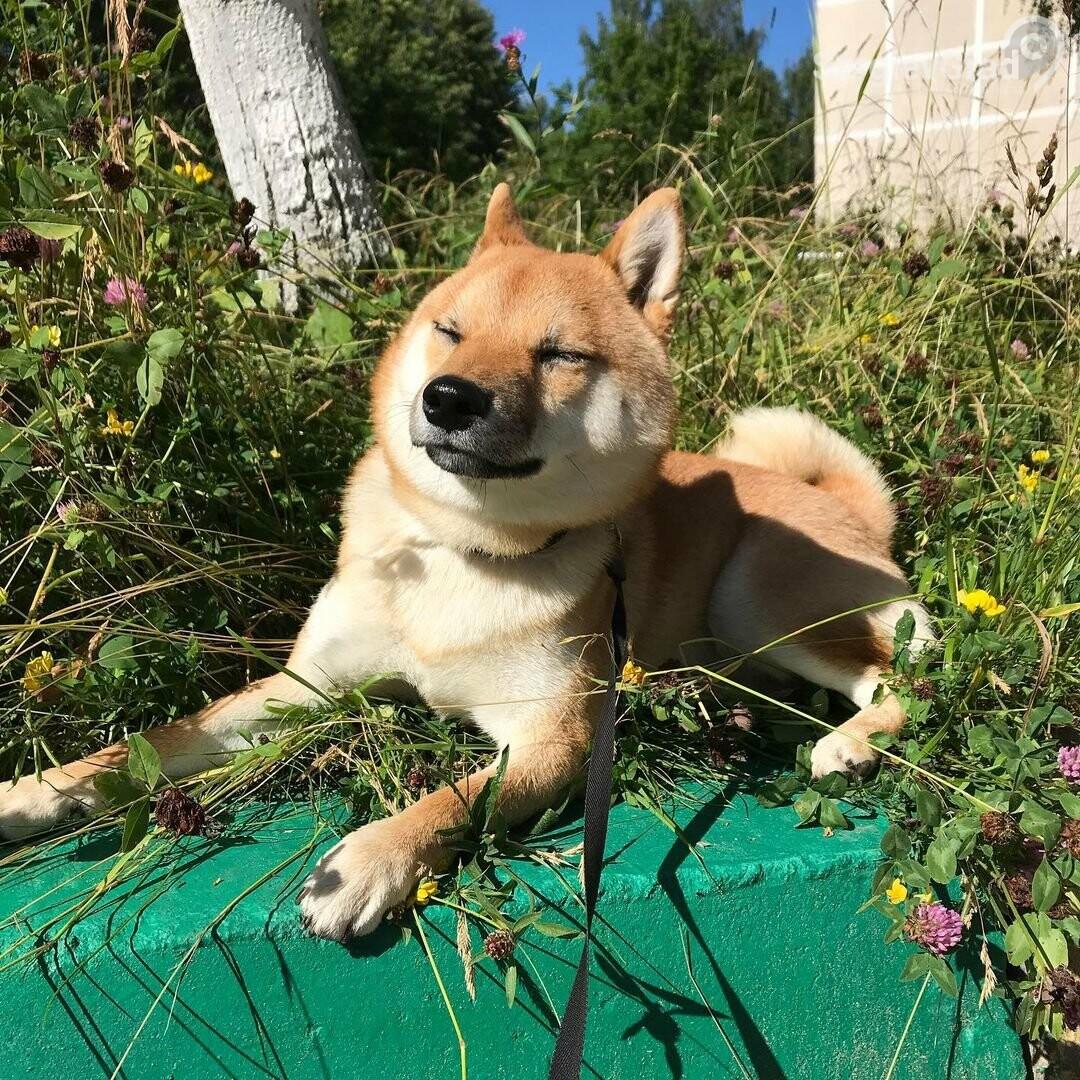 Участник конкурса «Верный друг» собака Ричард