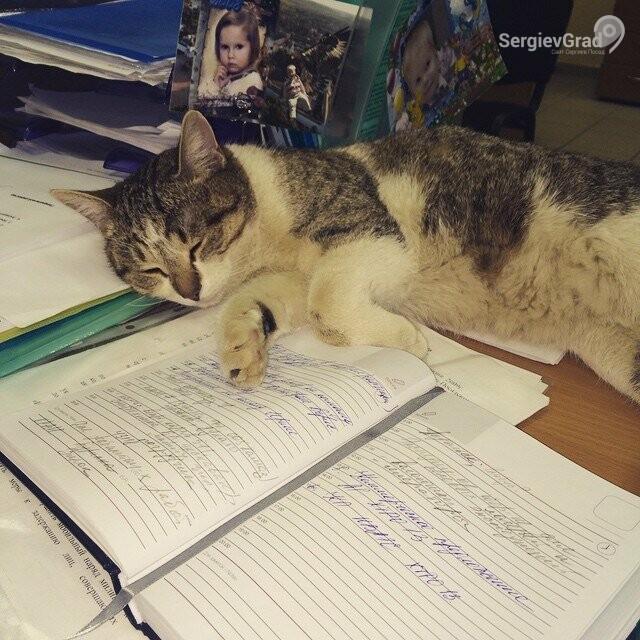 Участница конкурса «Верный друг» кошка Любимка
