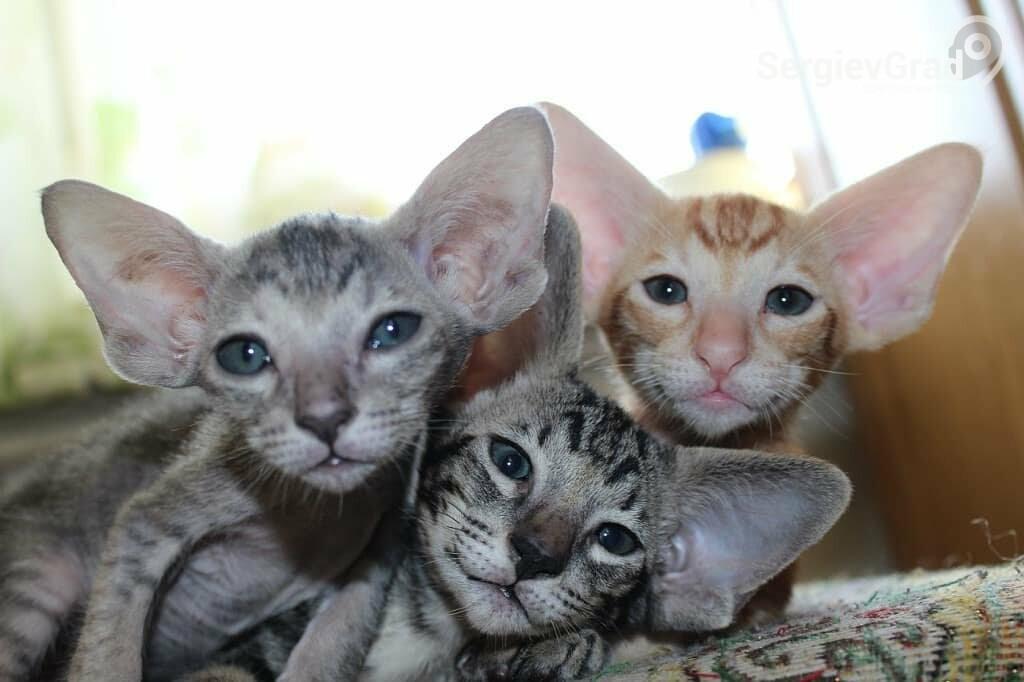 Участники конкурса «Верный друг»: котята Соня, Саймон и Солнце
