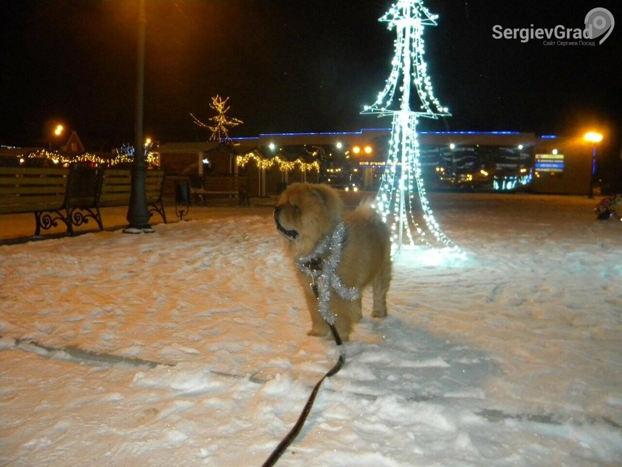 Участник конкурса «Верный друг»: пёс Прайд