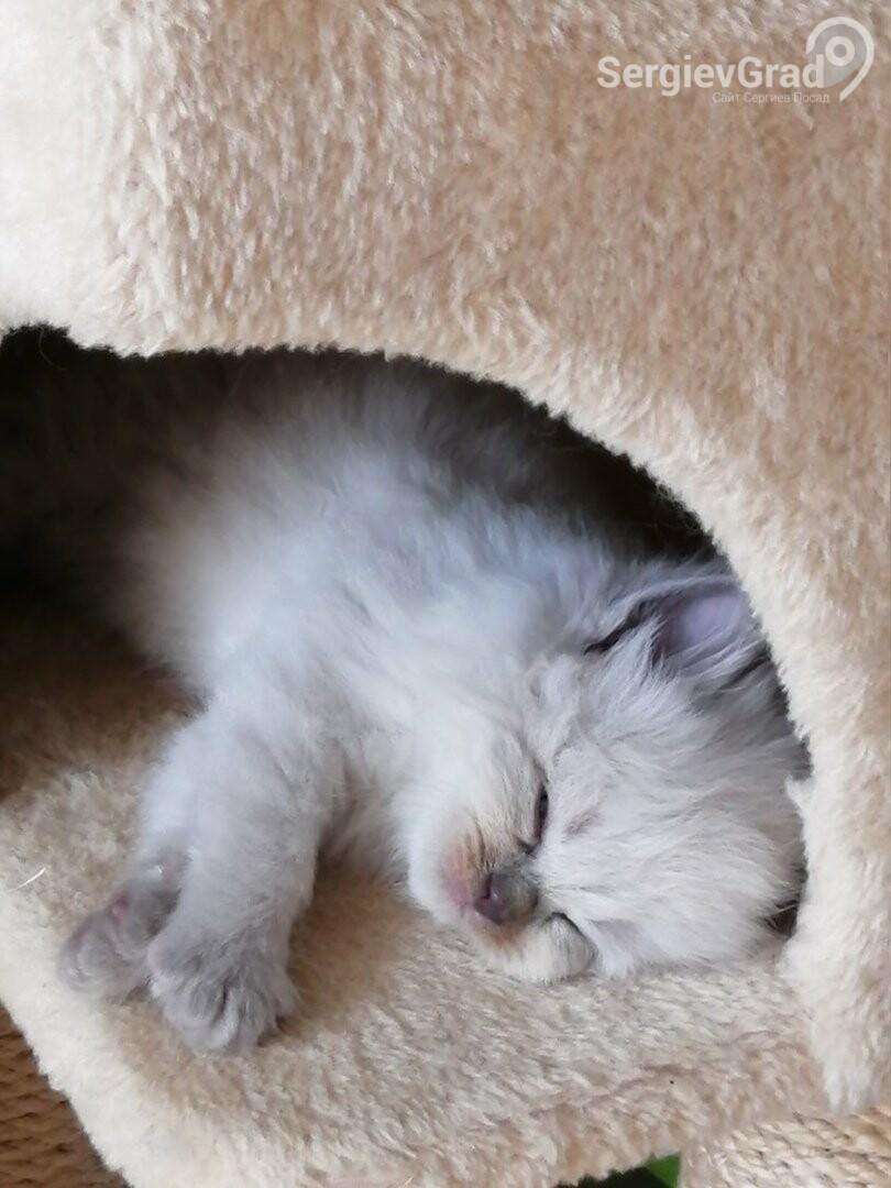 Участник конкурса «Верный друг»: котёнок Ричард