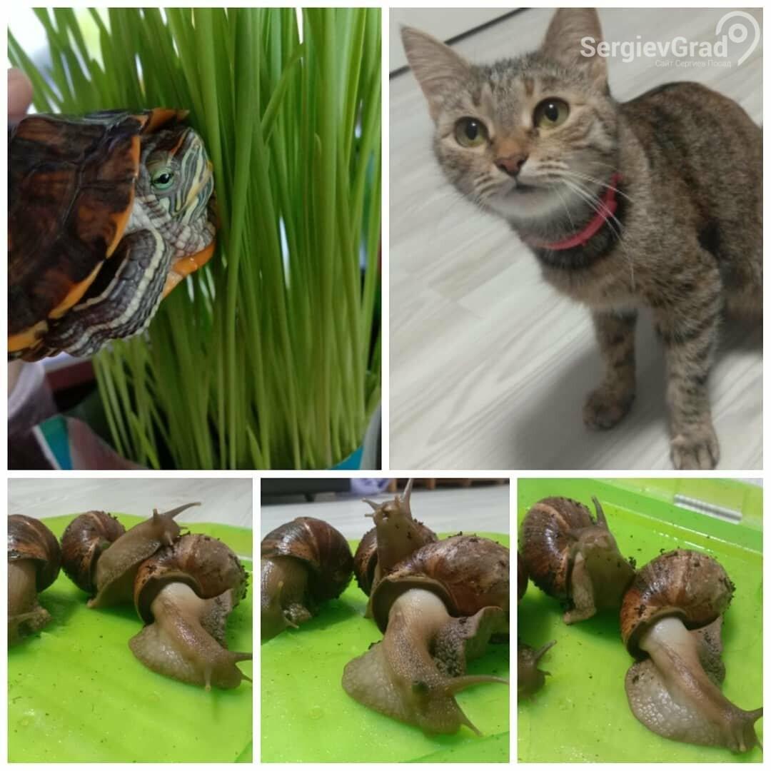 Участники конкурса «Верный друг»: черепаха Тартилла, кошечка Бася и улитки