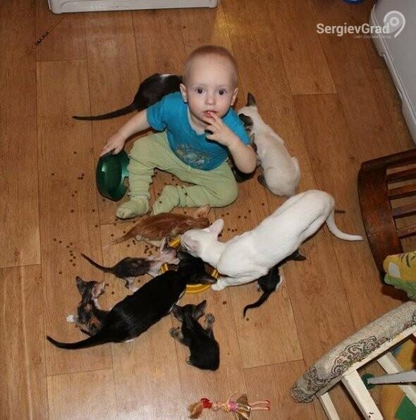 Участница конкурса «Верный друг» – кошка Индира с котятами