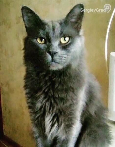 Участник конкурса «Верный друг» – кот Бася