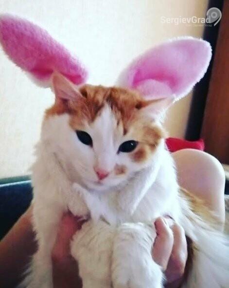 Участник конкурса «Верный друг» – кот Дизель