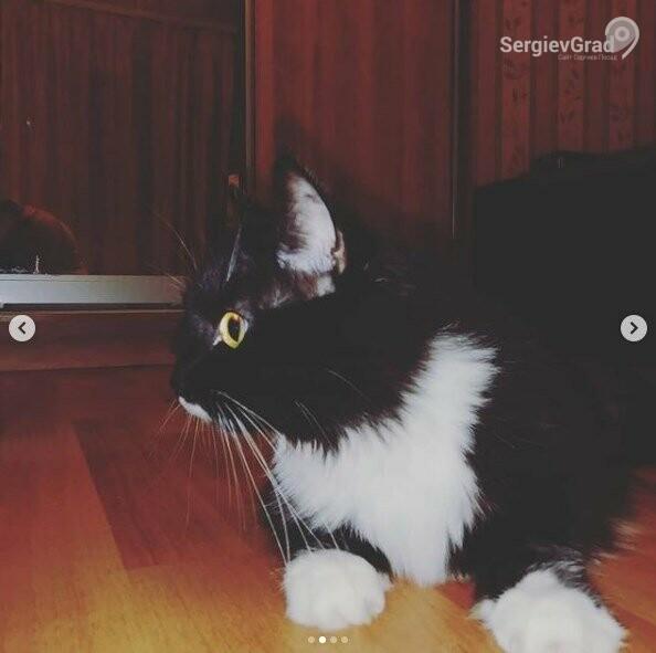 Участник конкурса «Верный друг» – кошка Алиса