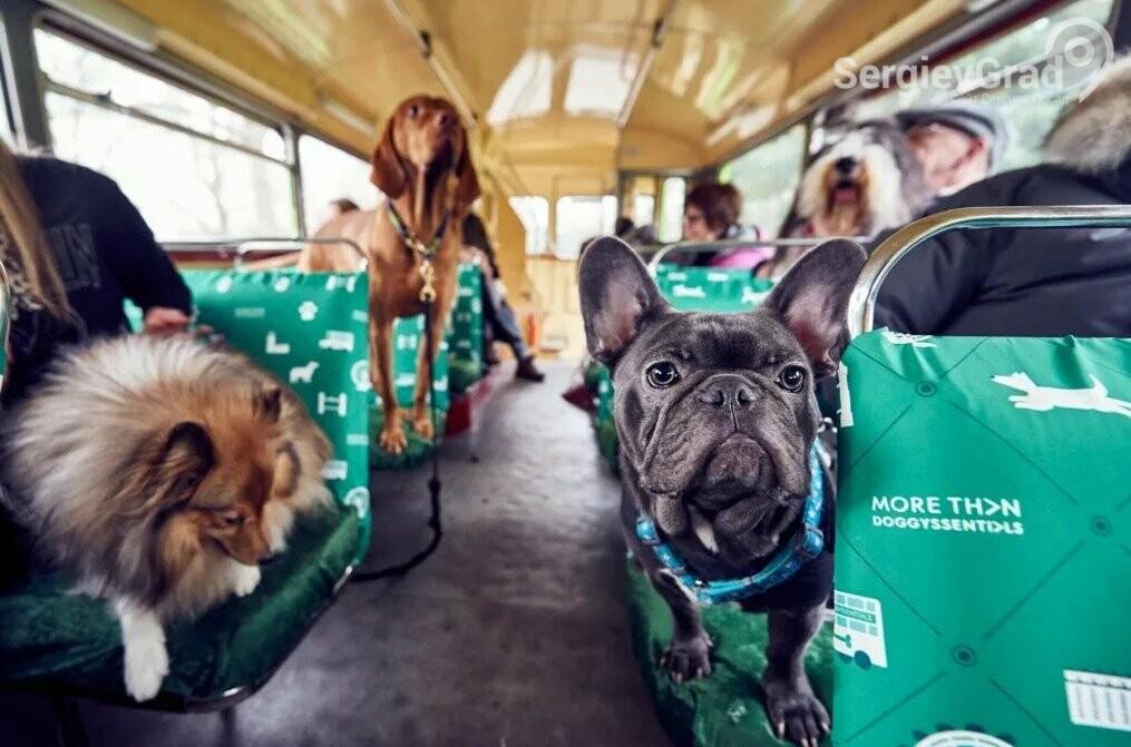 Правила и цена за перевозку домашних животных в общественном транспорте