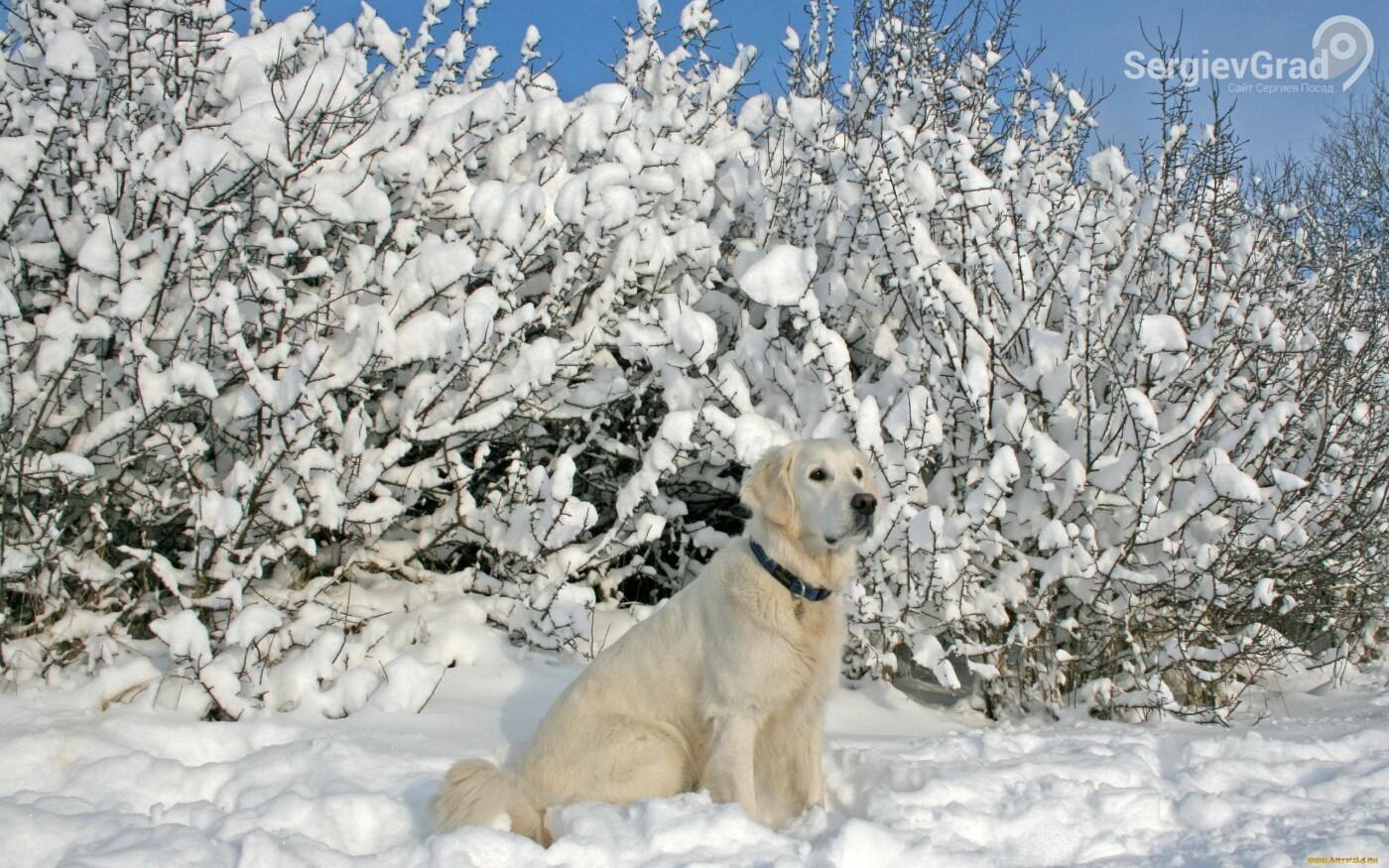 В Московской области введут штрафы за выгул собак без поводка