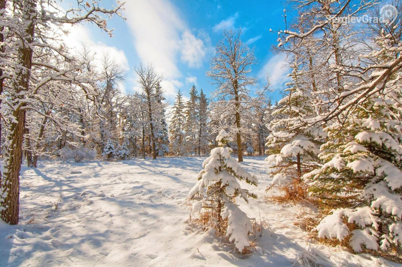 Мероприятие «Арендатор» по контролю за соблюдением требований в лесах началось в Подмосковье