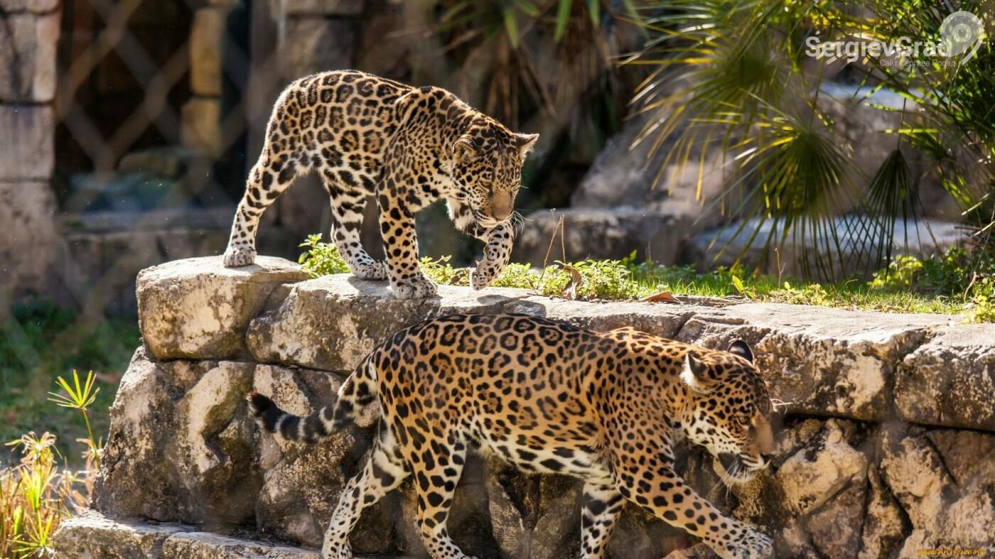 Минэкологии Подмосковья поддержал идею запрета деятельности мобильных зоопарков