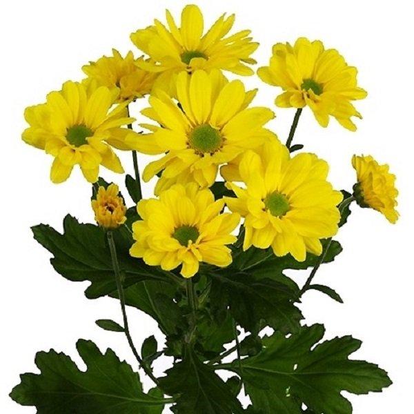 Императорский цветок, фото-1
