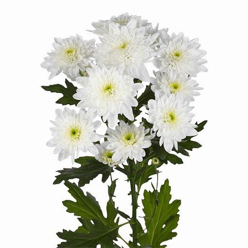 Императорский цветок, фото-3