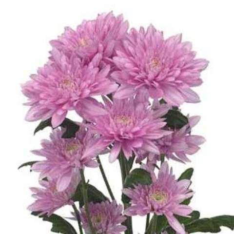 Императорский цветок, фото-4