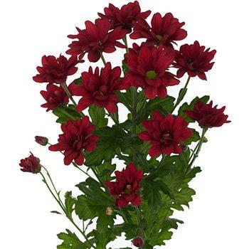 Императорский цветок, фото-2