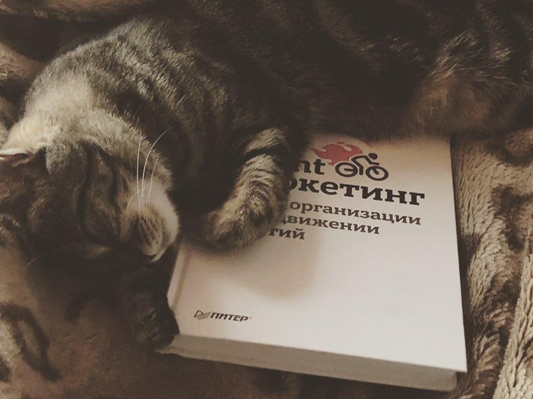 Участник конкурса «Домашние и смешные»: кот Красавчик, фото-1