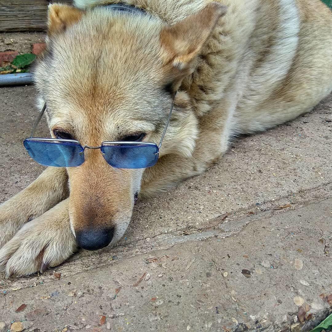 Участник конкурса «Домашние и смешные»: пес Боец, фото-2