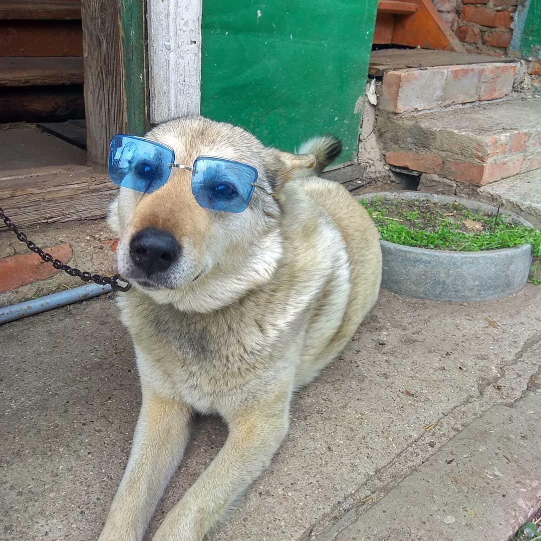 Участник конкурса «Домашние и смешные»: пес Боец, фото-1
